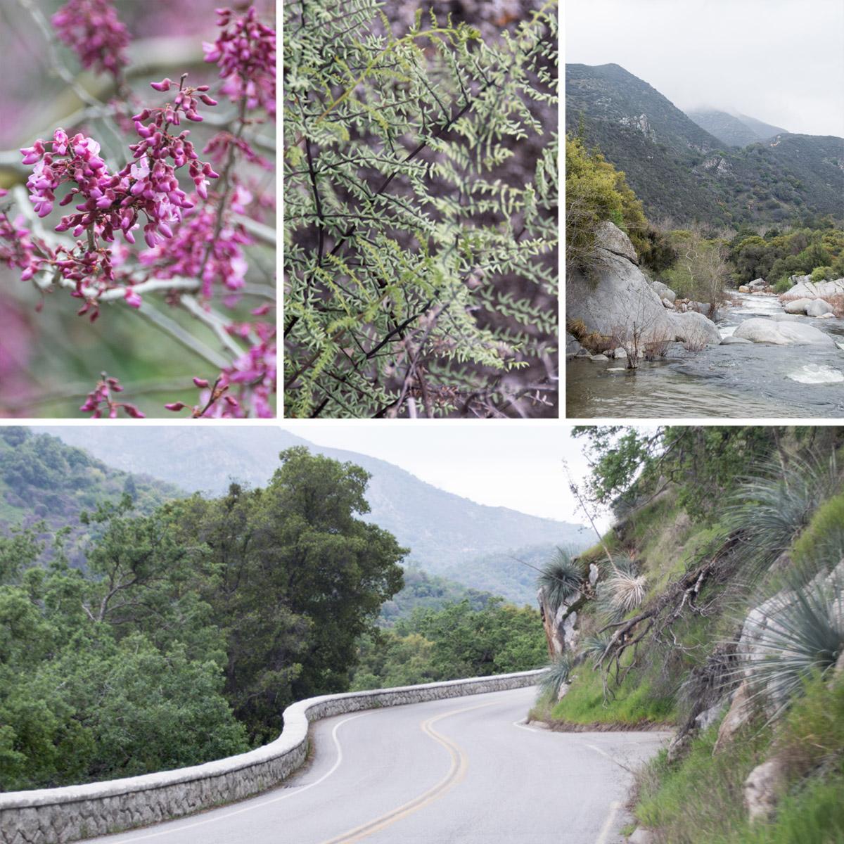 Sequoia_Tour2