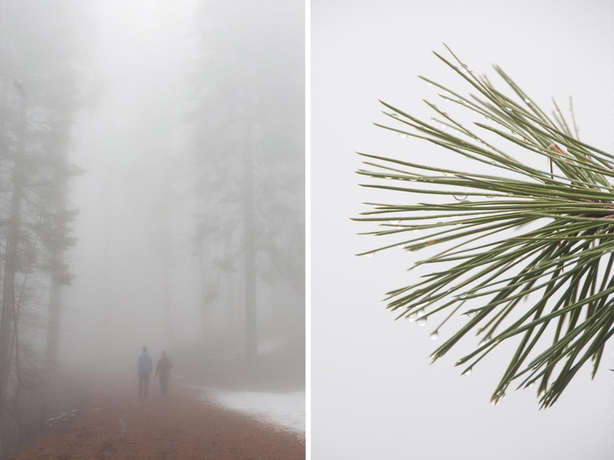 Sequoia_Tour3